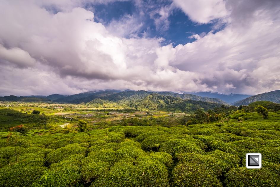 Indonesia-Sumatra-106