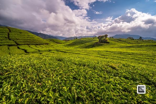 Indonesia-Sumatra-142