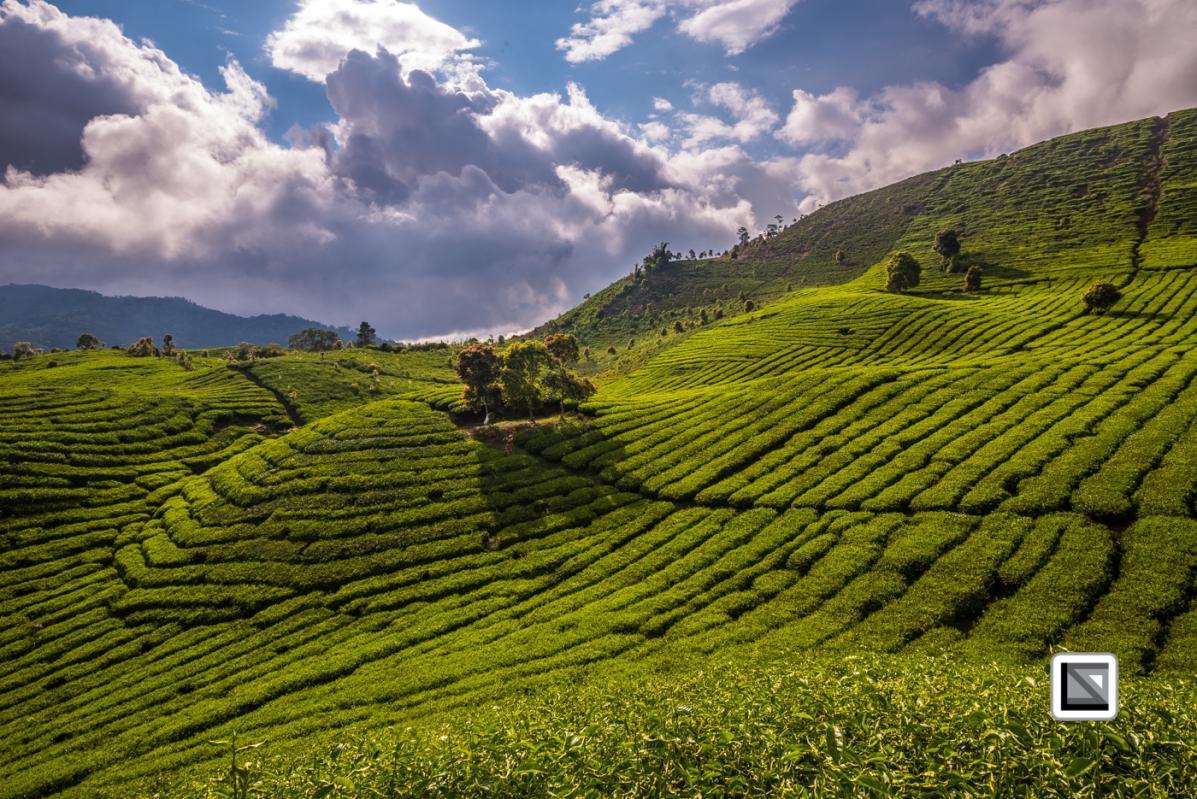 Indonesia-Sumatra-147