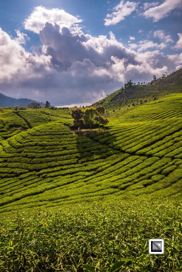 Indonesia-Sumatra-148