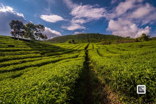 Indonesia-Sumatra-154