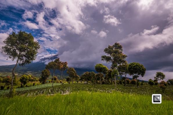 Indonesia-Sumatra-217
