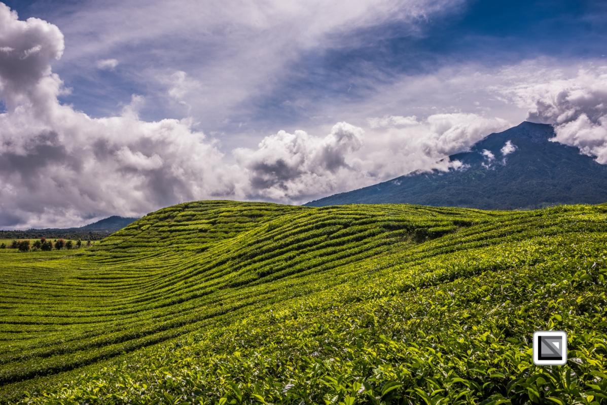 Indonesia-Sumatra-242