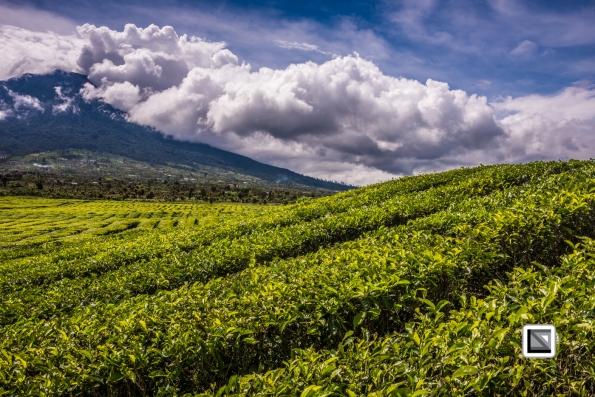 Indonesia-Sumatra-247