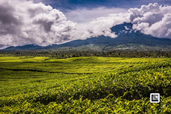 Indonesia-Sumatra-249