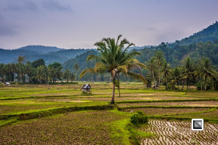 Indonesia-Sumatra-307