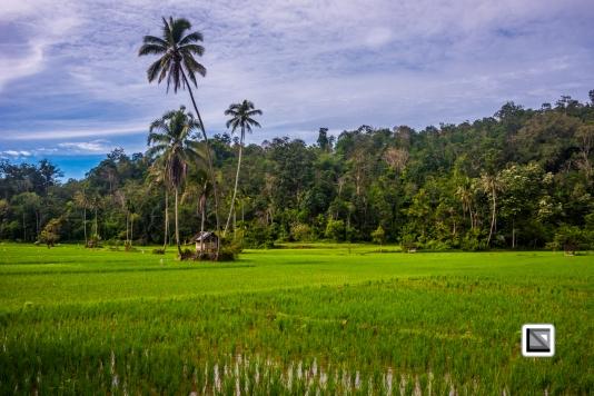 Indonesia-Sumatra-55