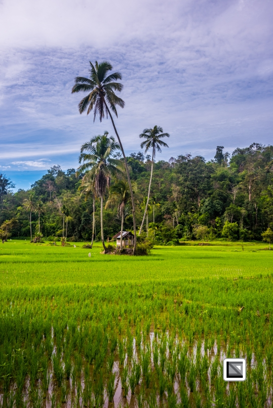 Indonesia-Sumatra-56