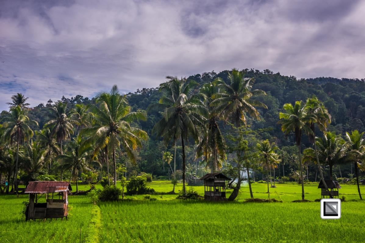 Indonesia-Sumatra-58