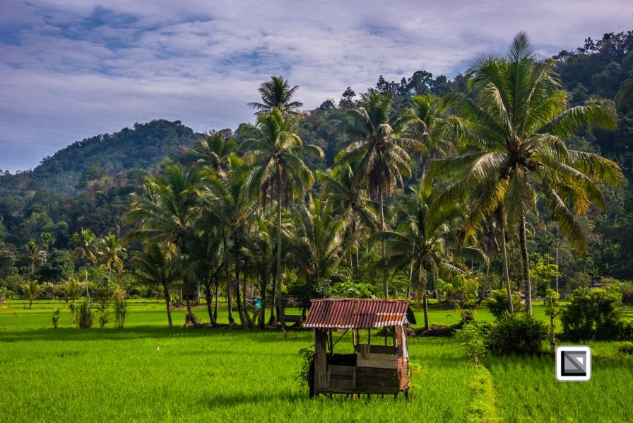 Indonesia-Sumatra-59