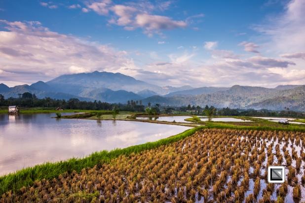 Indonesia-Sumatra-79