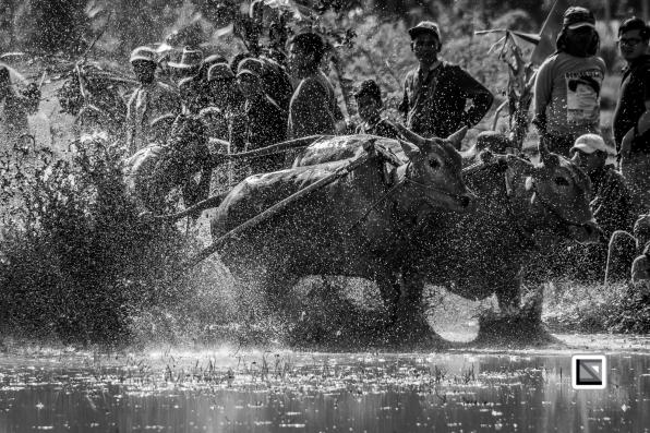 Indonesia-Sumatra-Pacu_Jawi-502-2