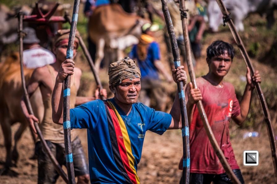 Indonesia-Sumatra-Pacu_Jawi-61
