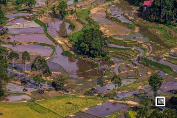 Indonesia-Toraja-26