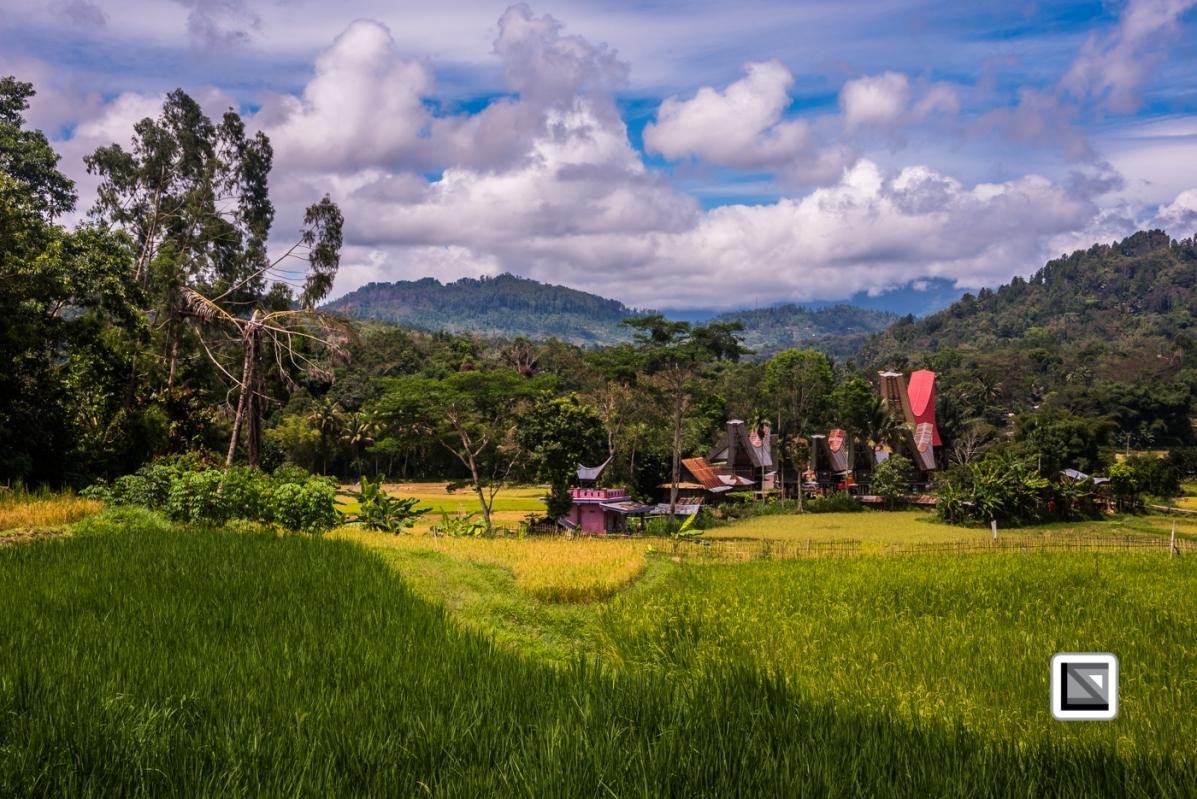 Indonesia-Toraja-66
