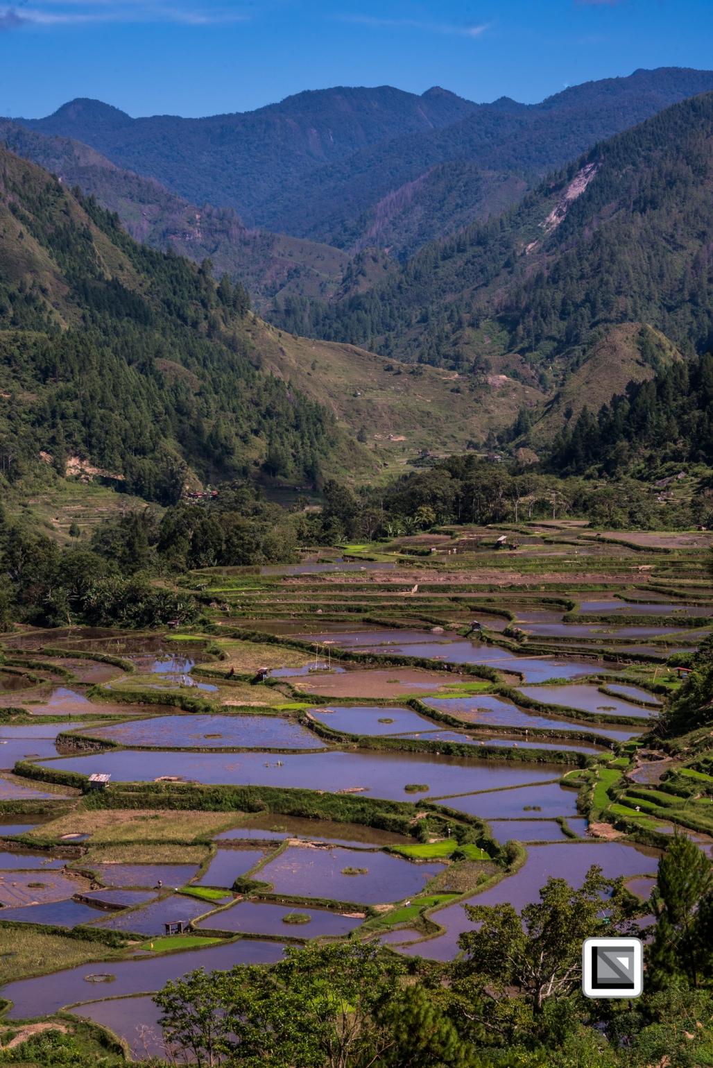 Indonesia-Toraja-Baruppo-Ricefields-30