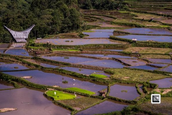 Indonesia-Toraja-Baruppo-Ricefields-36