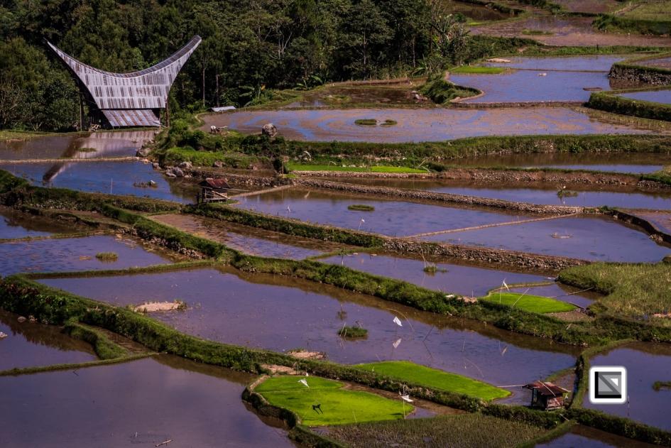 Indonesia-Toraja-Baruppo-Ricefields-37