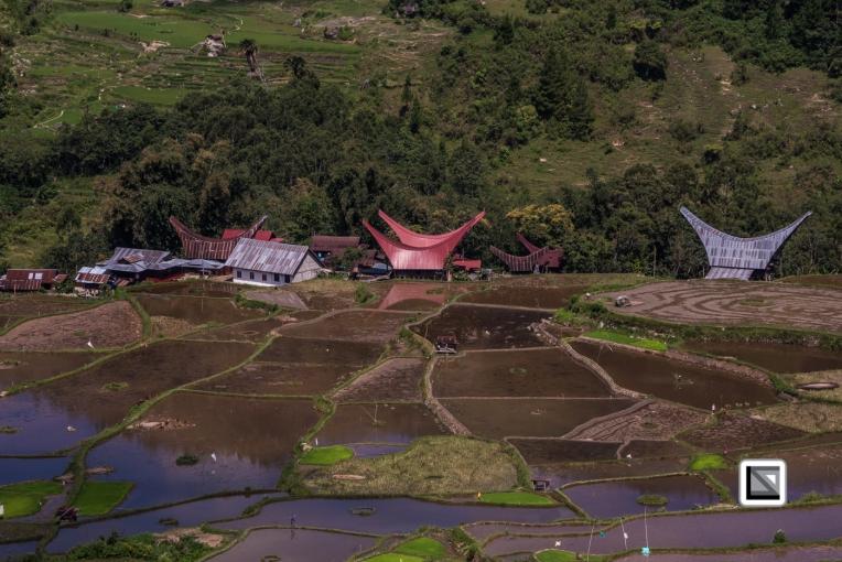 Indonesia-Toraja-Baruppo-Ricefields-52