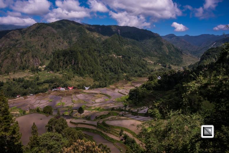 Indonesia-Toraja-Baruppo-Ricefields-58