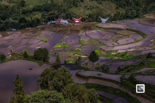 Indonesia-Toraja-Baruppo-Ricefields-59