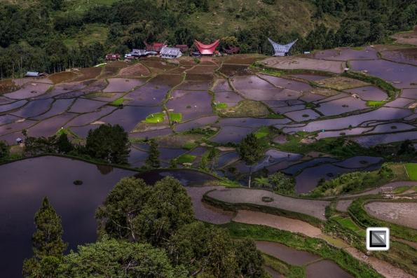 Indonesia-Toraja-Baruppo-Ricefields-60