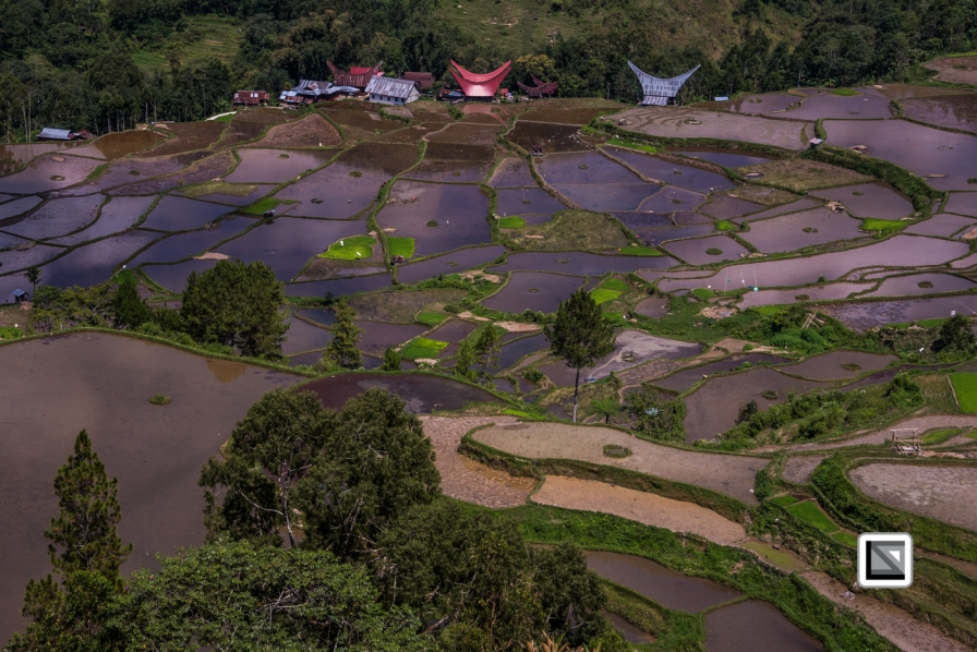 Indonesia-Toraja-Baruppo-Ricefields-62