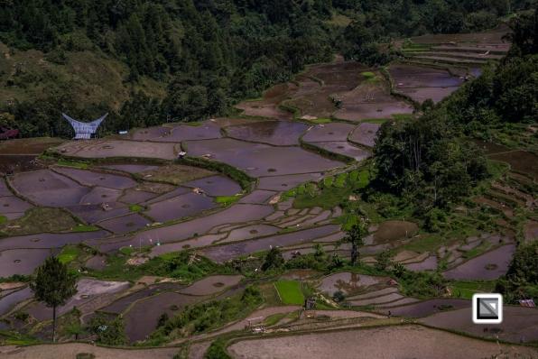 Indonesia-Toraja-Baruppo-Ricefields-69