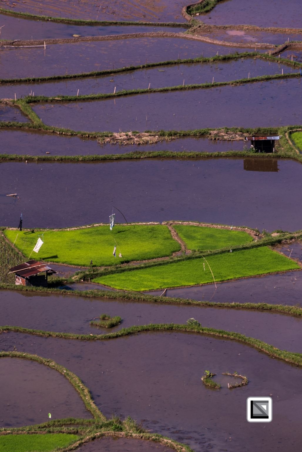 Indonesia-Toraja-Baruppo-Ricefields-7