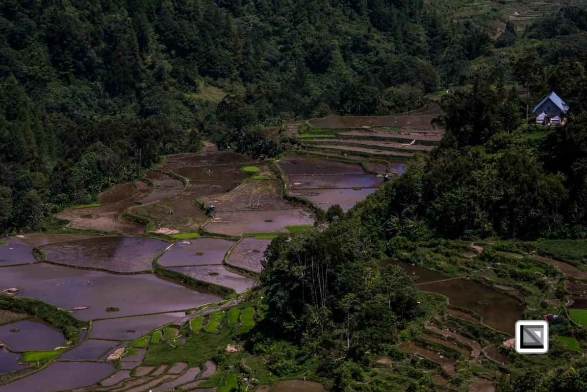 Indonesia-Toraja-Baruppo-Ricefields-70