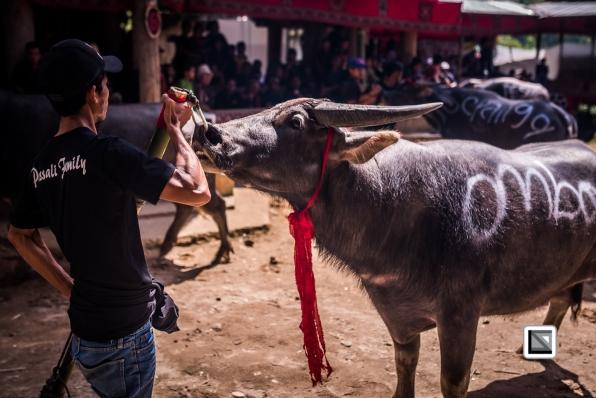 Indonesia-Toraja-Rambu_Solo-Loko_Uru-Philippus_Possali_and_Albertina_Allo-12