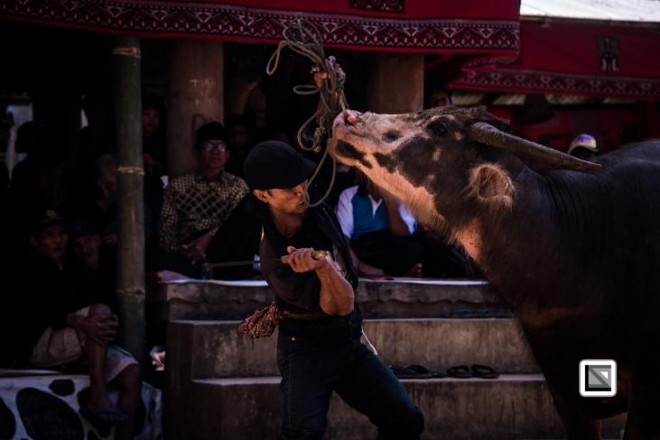 Indonesia-Toraja-Rambu_Solo-Loko_Uru-Philippus_Possali_and_Albertina_Allo-41