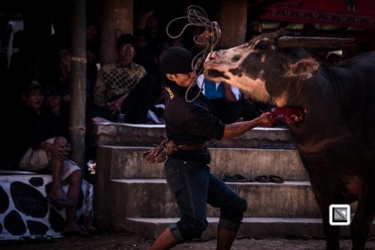 Indonesia-Toraja-Rambu_Solo-Loko_Uru-Philippus_Possali_and_Albertina_Allo-42