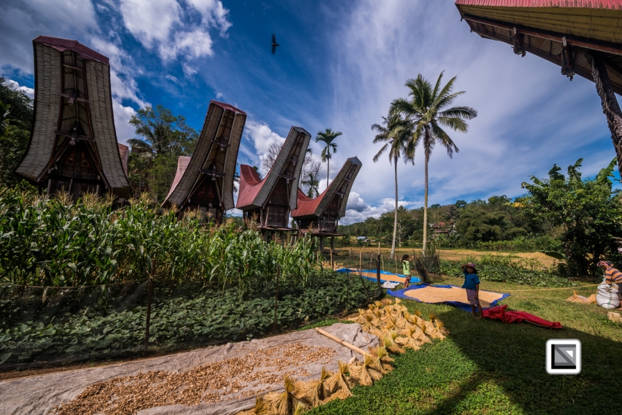 Indonesia-Toraja-Sangalla-Tongkonan-Landscape-14