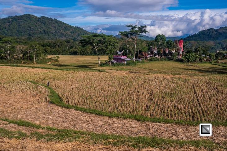 Indonesia-Toraja-Sangalla-Tongkonan-Landscape-23