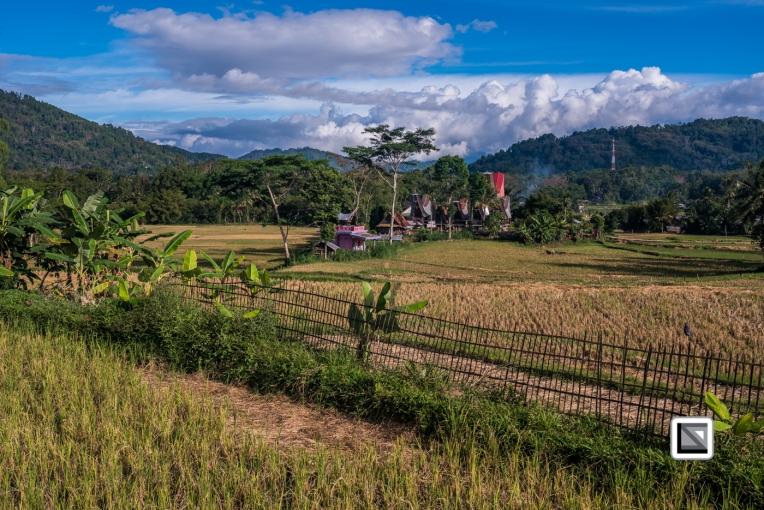 Indonesia-Toraja-Sangalla-Tongkonan-Landscape-24