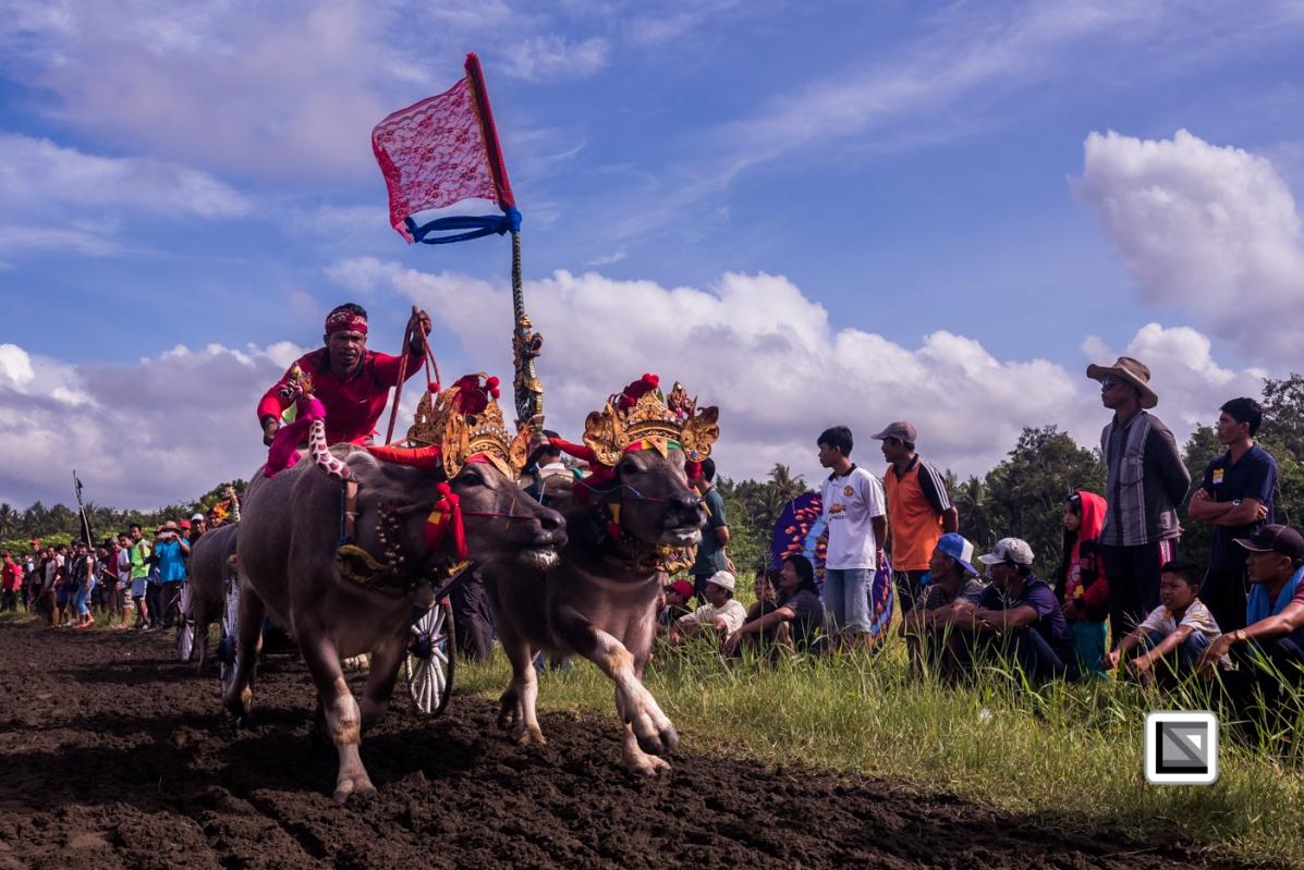 Indonesia-Bali-Makepung_Jembrana_Cup-Tuwed_Village_Circuit-10