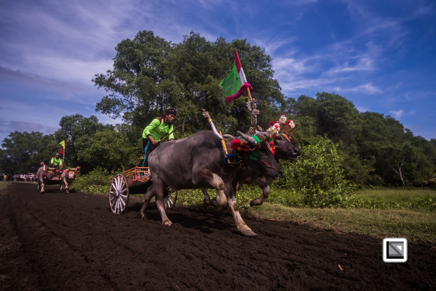 Indonesia-Bali-Makepung_Jembrana_Cup-Tuwed_Village_Circuit-100