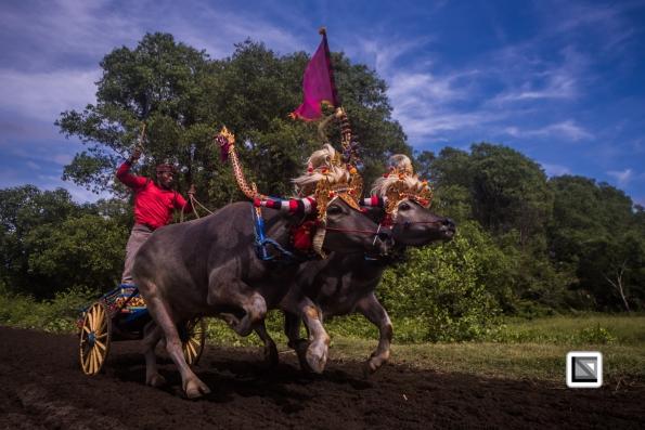 Indonesia-Bali-Makepung_Jembrana_Cup-Tuwed_Village_Circuit-104-2