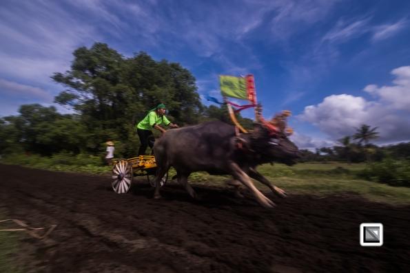 Indonesia-Bali-Makepung_Jembrana_Cup-Tuwed_Village_Circuit-106