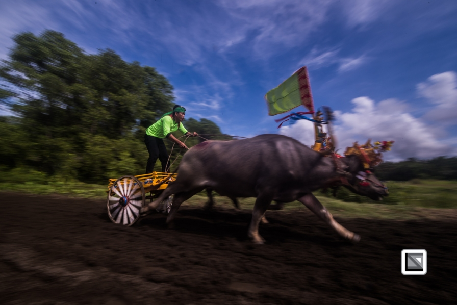 Indonesia-Bali-Makepung_Jembrana_Cup-Tuwed_Village_Circuit-107