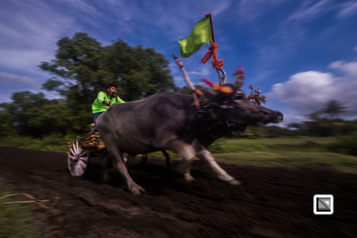 Indonesia-Bali-Makepung_Jembrana_Cup-Tuwed_Village_Circuit-108