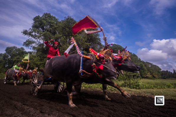 Indonesia-Bali-Makepung_Jembrana_Cup-Tuwed_Village_Circuit-112