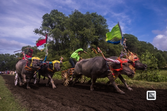 Indonesia-Bali-Makepung_Jembrana_Cup-Tuwed_Village_Circuit-115