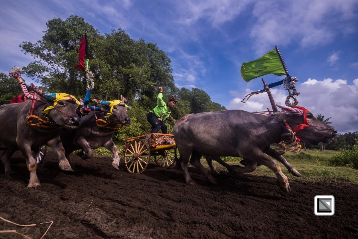 Indonesia-Bali-Makepung_Jembrana_Cup-Tuwed_Village_Circuit-116