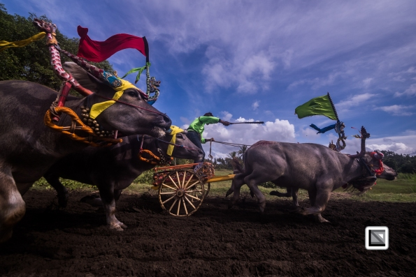 Indonesia-Bali-Makepung_Jembrana_Cup-Tuwed_Village_Circuit-117