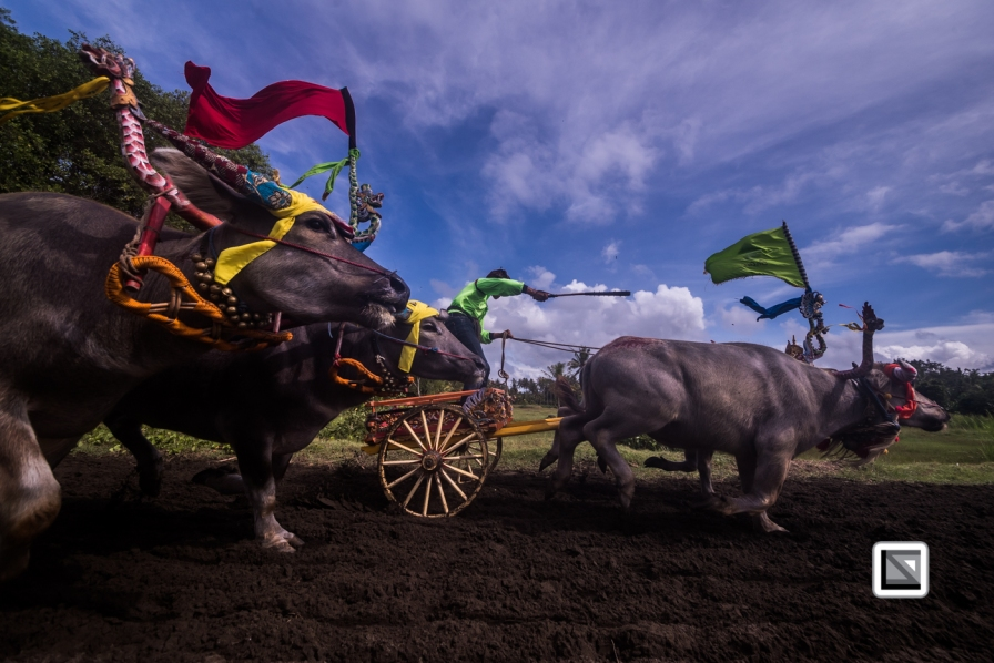 Indonesia-Bali-Makepung_Jembrana_Cup-Tuwed_Village_Circuit-117