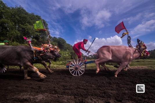 Indonesia-Bali-Makepung_Jembrana_Cup-Tuwed_Village_Circuit-121