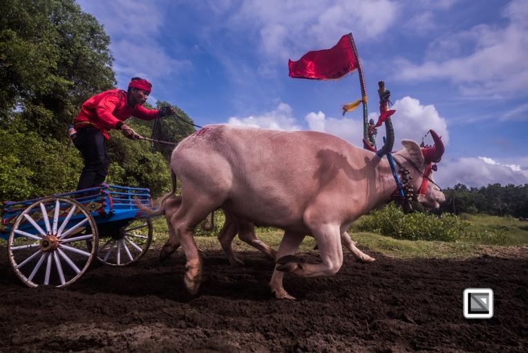 Indonesia-Bali-Makepung_Jembrana_Cup-Tuwed_Village_Circuit-125