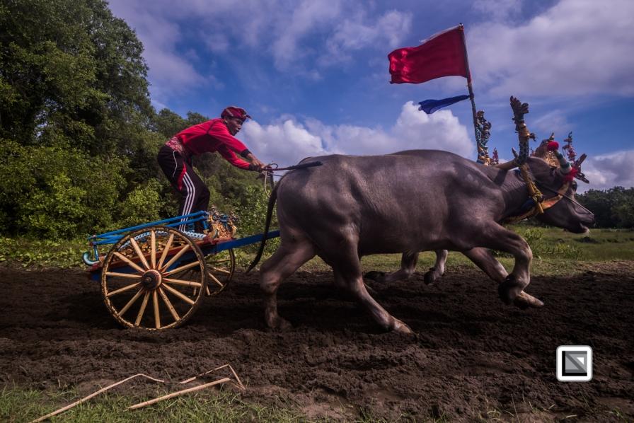 Indonesia-Bali-Makepung_Jembrana_Cup-Tuwed_Village_Circuit-127